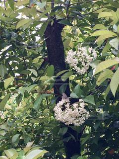 茶色の蝶の写真・画像素材[4399876]