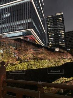 紀尾井町 桜のライトアップの写真・画像素材[4362501]