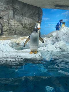 ペンギンのGWの写真・画像素材[4382821]