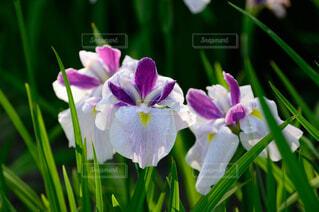 花のクローズアップの写真・画像素材[4370886]