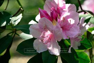花のクローズアップの写真・画像素材[4373553]