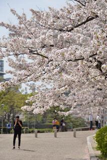 木の隣の通りを歩いている人々のグループの写真・画像素材[4392778]