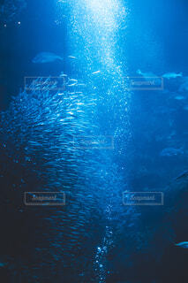 水族館の写真・画像素材[4362934]