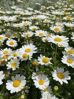 花のクローズアップの写真・画像素材[4363467]