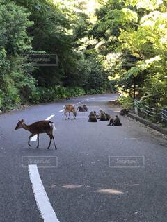 屋久島の西部林道にての写真・画像素材[4382522]