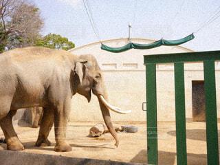 草の中に立っている象の写真・画像素材[4364490]