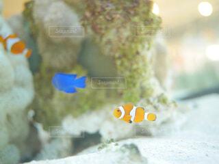 魚の写真・画像素材[4365024]