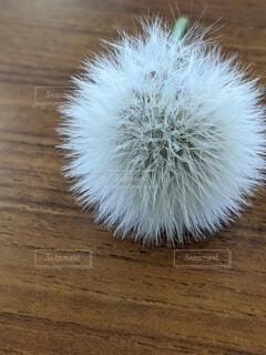 種川辺の花の種の写真・画像素材[4408515]