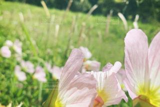 花の背中2の写真・画像素材[4393417]