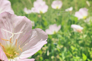 なんの花でしょうの写真・画像素材[4393419]