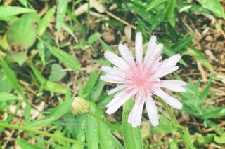 花の写真・画像素材[4413157]
