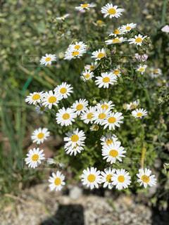 草で覆われた畑の上に座っている花瓶の写真・画像素材[4382188]