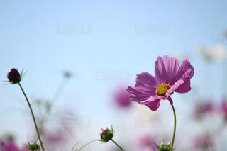 自然の写真・画像素材[268609]