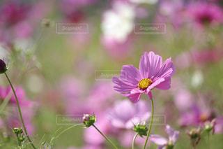 自然の写真・画像素材[268610]