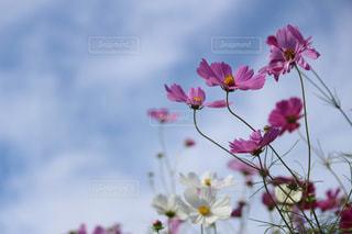 自然の写真・画像素材[268612]