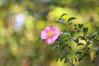 花の写真・画像素材[268615]