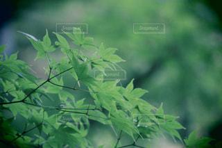 秋の写真・画像素材[268616]