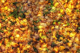 秋の写真・画像素材[268619]