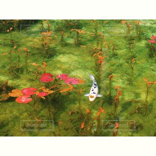自然の写真・画像素材[275124]