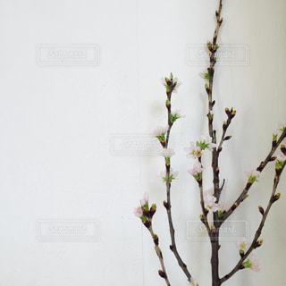 花の写真・画像素材[322427]