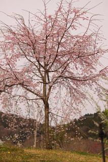春の写真・画像素材[417534]