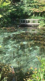 背景の水の庭の写真・画像素材[1511615]