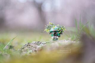 春を満喫するソルジャーの写真・画像素材[4369169]