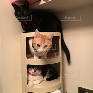 猫のマンションの写真・画像素材[4369634]