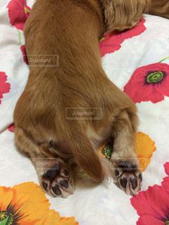 犬の写真・画像素材[215400]