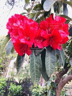 赤い花の写真・画像素材[4376020]