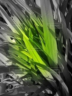 草の写真・画像素材[4383111]