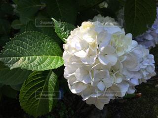 花の写真・画像素材[186522]