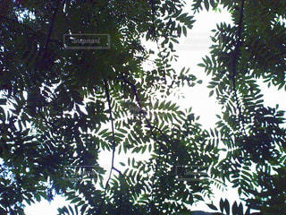 森林 - No.186579