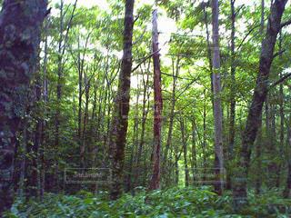 森林 - No.186580