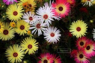 カラフルな花園の写真・画像素材[4380770]