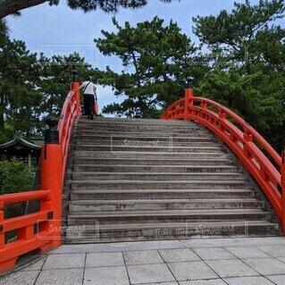 住吉大社の橋の写真・画像素材[4536254]