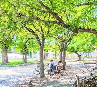 公園でお昼ごはんを食べる老夫婦の写真・画像素材[4672408]
