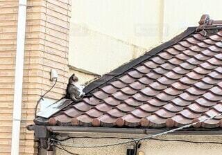 屋根の上の野良猫の写真・画像素材[4950412]