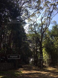 森林の写真・画像素材[186905]