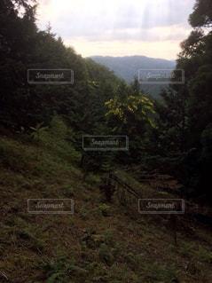森林の写真・画像素材[186906]