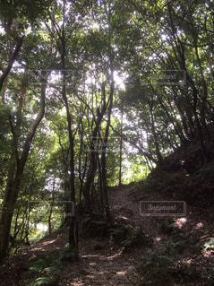 森林の写真・画像素材[186907]