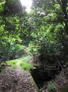 森林の写真・画像素材[186912]
