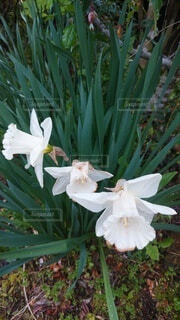 雨の日の花の写真・画像素材[4388159]