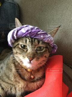 祭り猫の写真・画像素材[4384693]