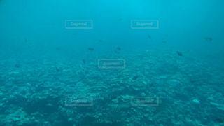 宮古島の海底です。クルージングしながら撮影しましたの写真・画像素材[846914]