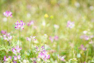 花のクローズアップの写真・画像素材[4399151]