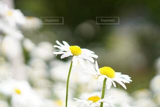 花の写真・画像素材[4399148]