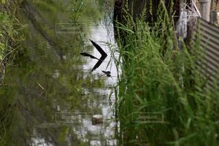 水路の写真・画像素材[4417460]