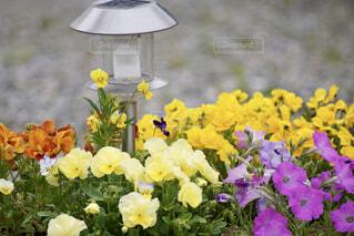 花の写真・画像素材[4417466]