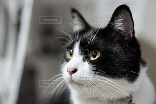 猫のクローズアップの写真・画像素材[4431758]